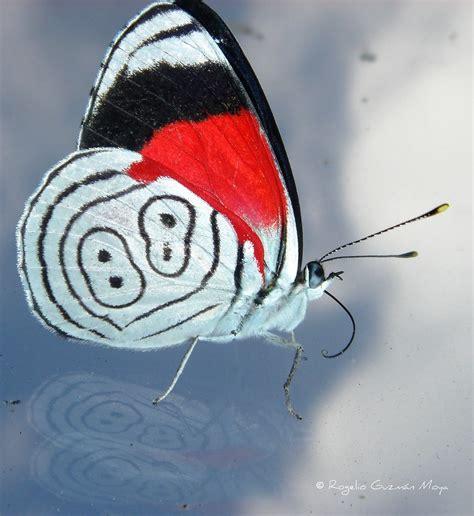 Mariposa 88 / Butterfly 88   Copyright© Rogelio Guzmán ...