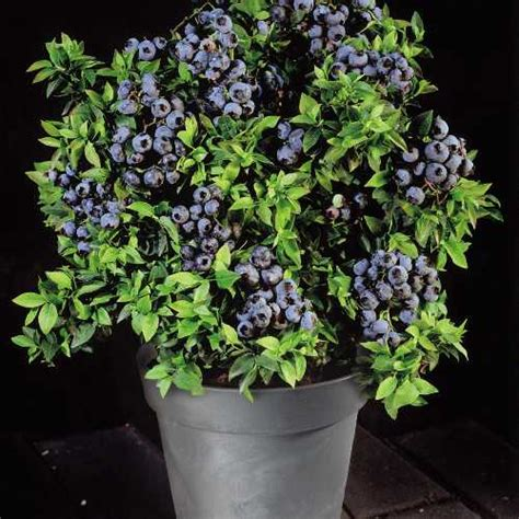 Winter blooms to break up any landscape | Liveston Moves