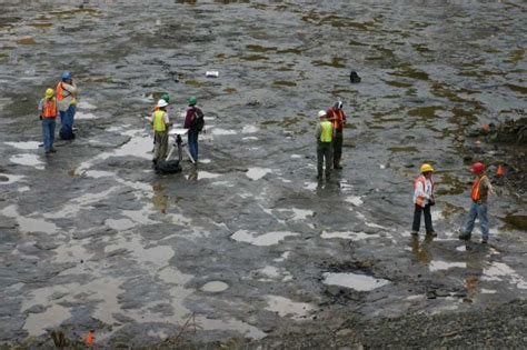 World's oldest fossil trees uncovered in New York…