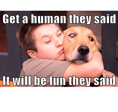 45 Funny Dog Memes - Dogtime