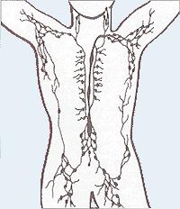 Lymphatisches System - Wikipedia