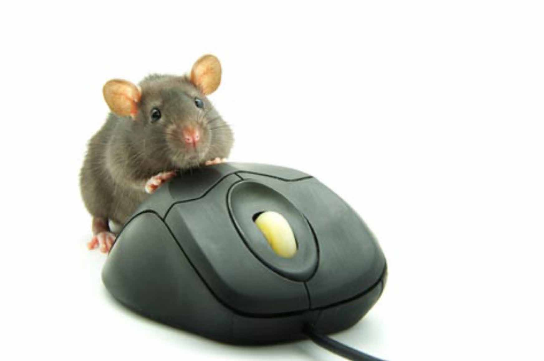 Recommendation | Virulent Word of Mouse