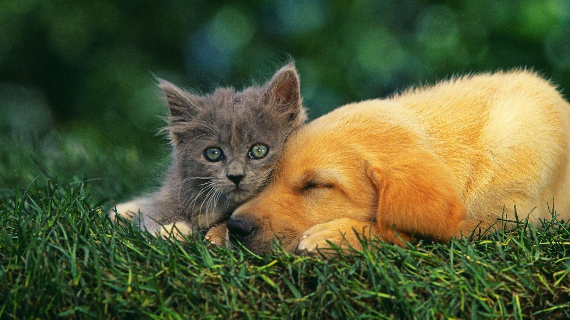 Dog And Cat Wallpapers - Wallpaper Cave