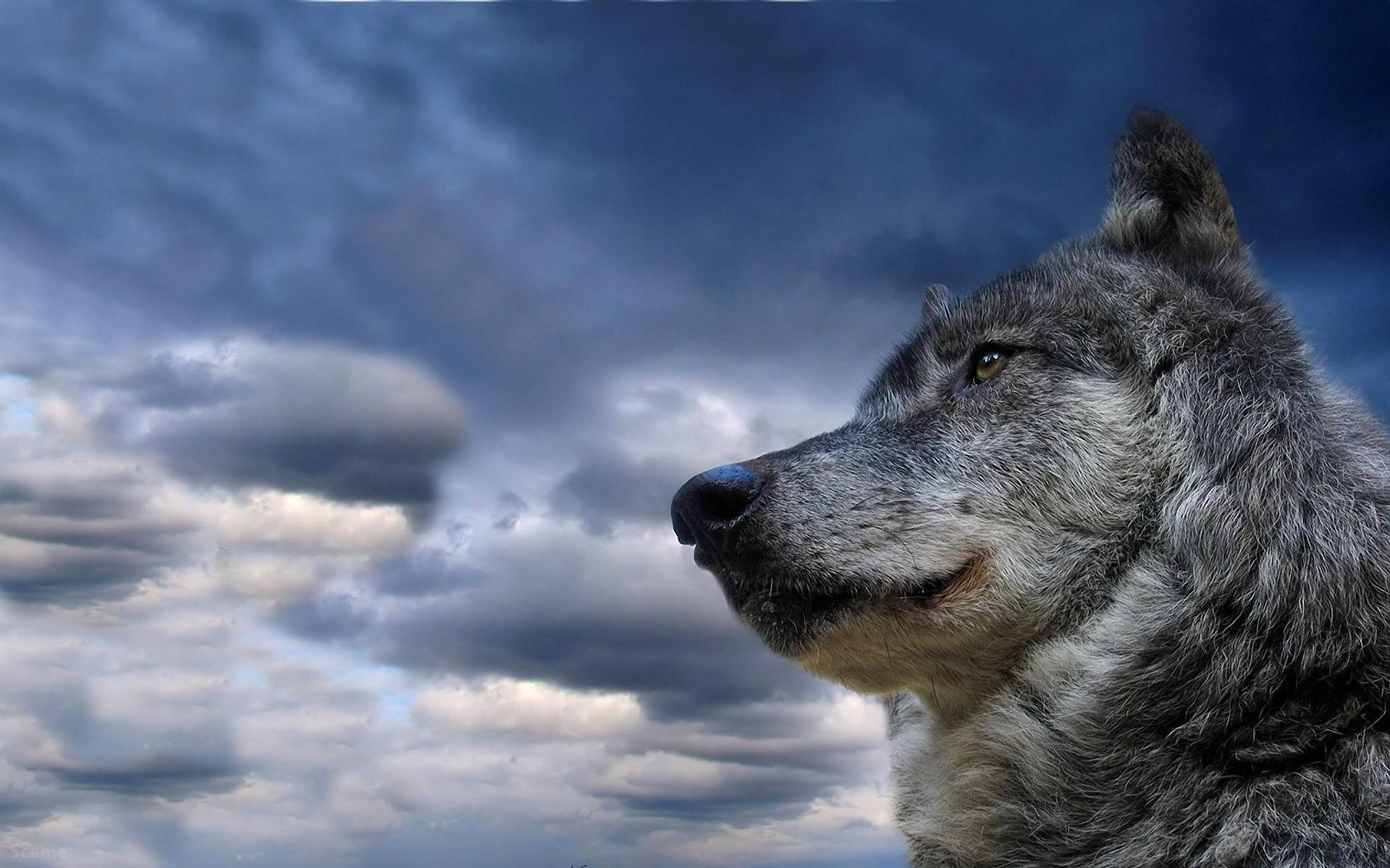 Lone Wolf Wallpaper ·① WallpaperTag