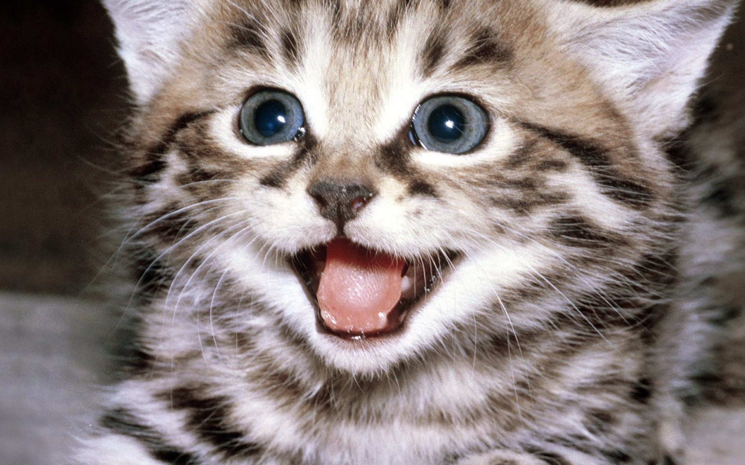 kittens, Kitten, Cat, Cats, Baby, Cute Wallpapers HD ...