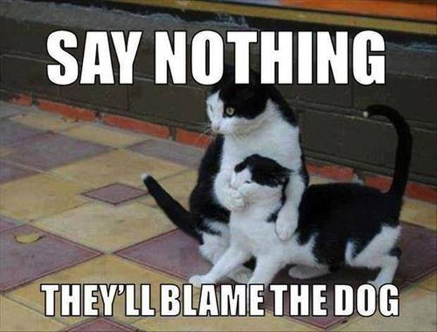 20 Most Funniest Animal Meme Pictures And Images