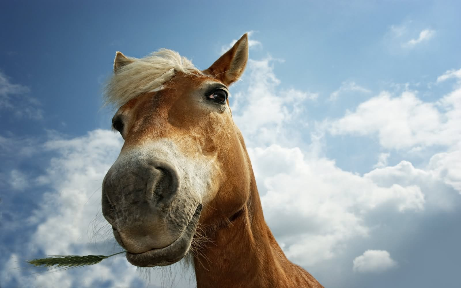 50 Very Funny Horse Face Pictures And Images