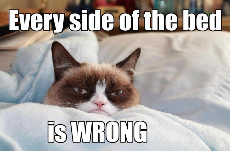35 Most Funniest Grumpy Cat Memes On The Internet