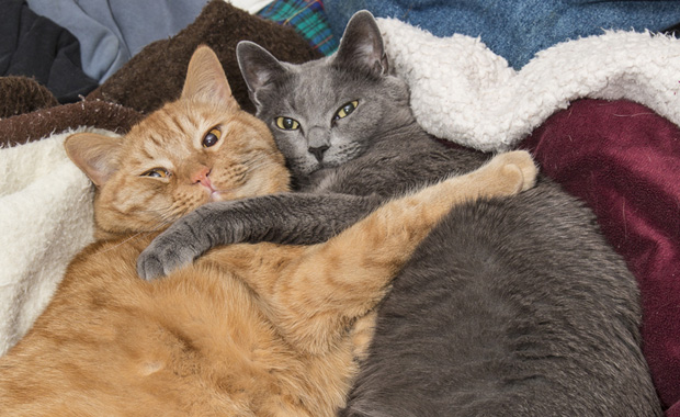 Cat Owners Spend an Average of 20 Hours a Week with Their Cat