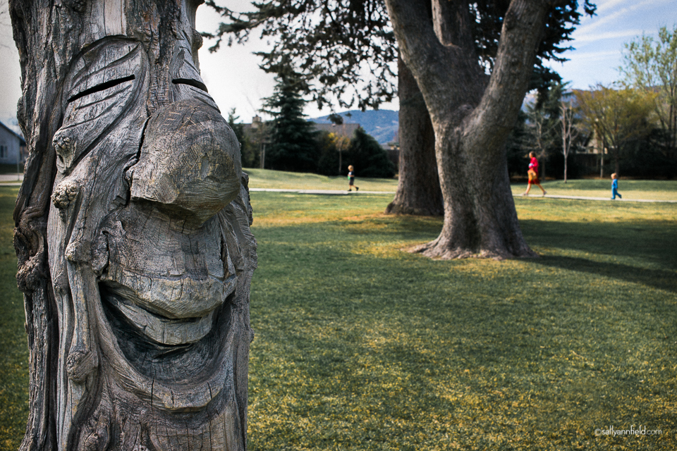 The Laughing Tree by Sally Ann Field