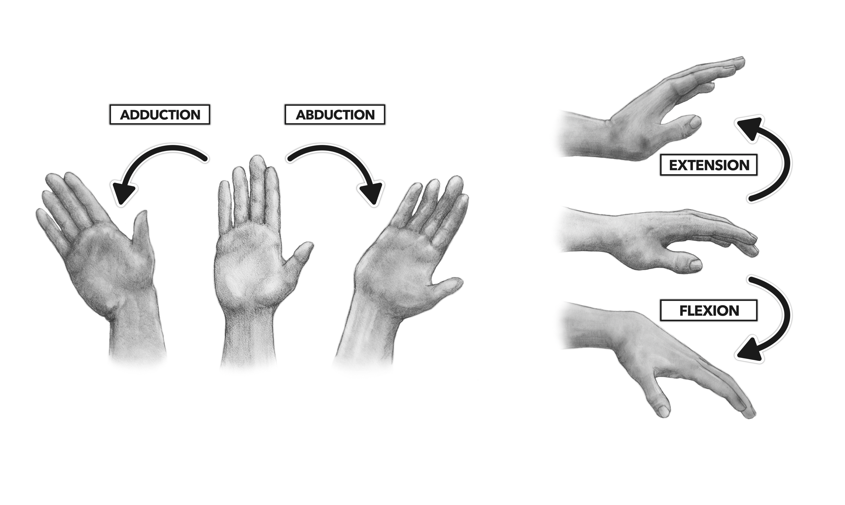 The gallery for --> Wrist Joint Movements