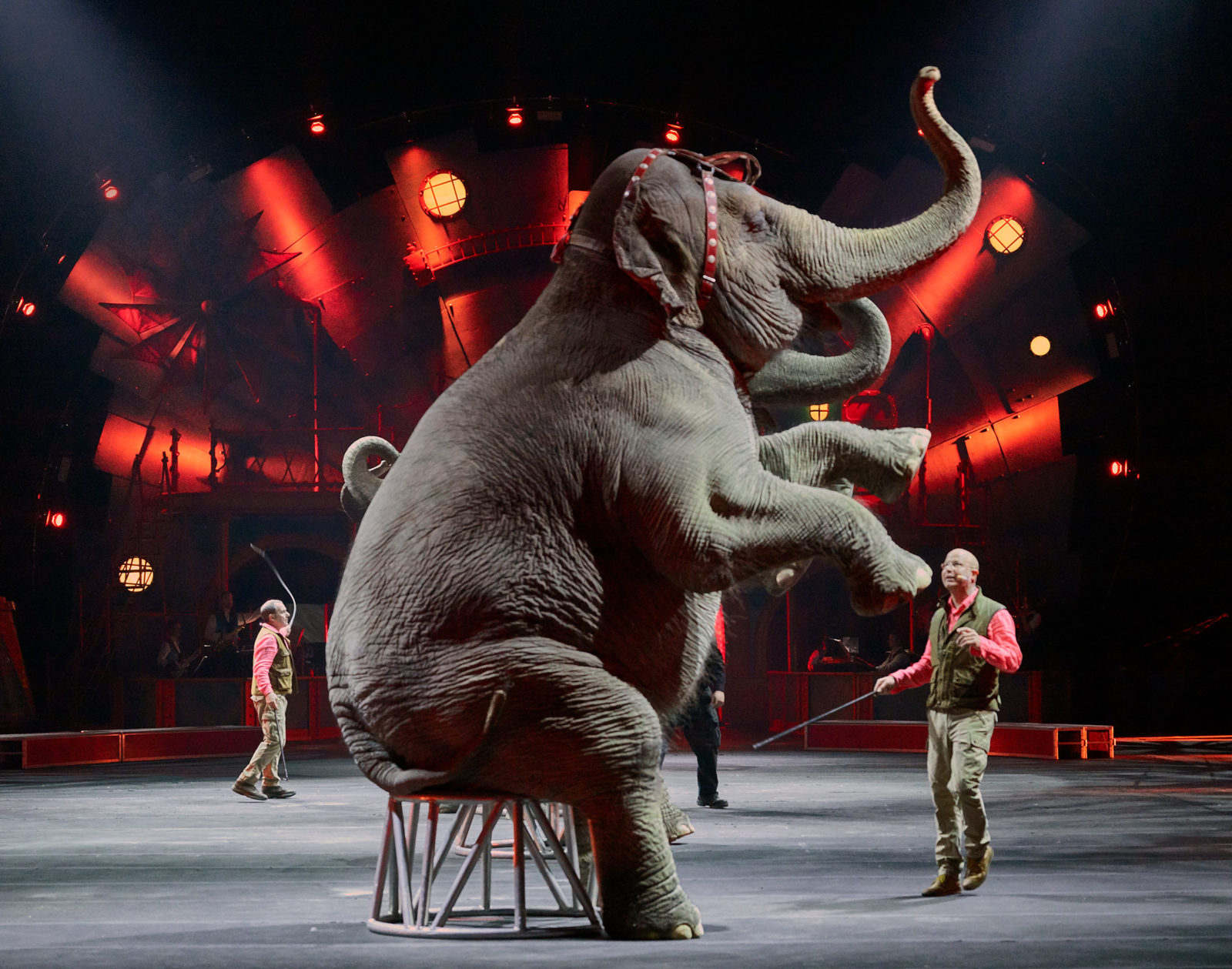 Elephant-Circus - DT Commercial Photo