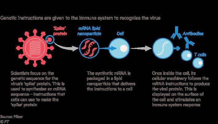 Secret ingredients behind the breakthrough Covid vaccines ...