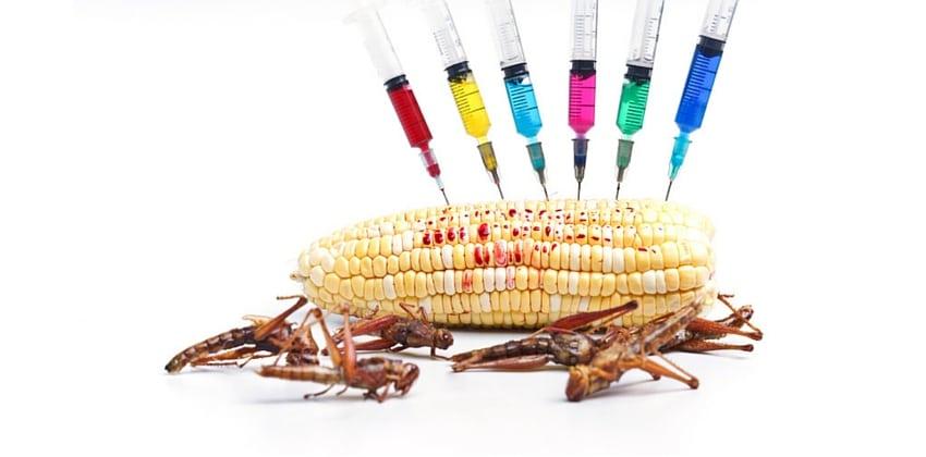 GMO Health Risks - Healthy Child