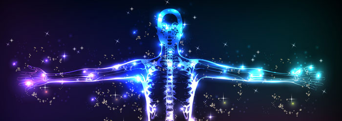 The Amazing Human Body | The Institute for Creation Research
