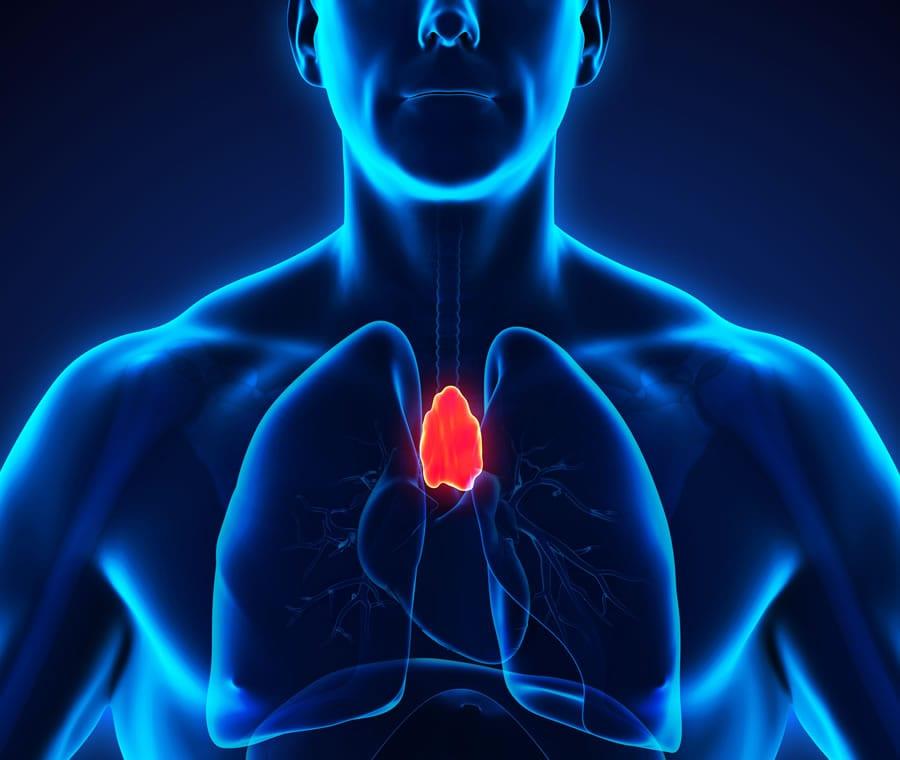 Timo (Ghiandola): Anatomia, Funzione e Patologie