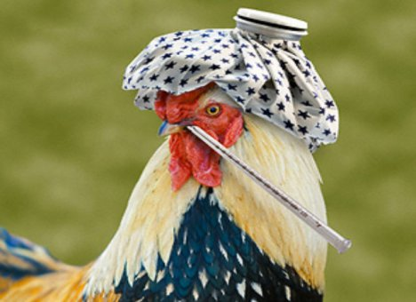 Bird Flu Is Back – China Faces Yet Another Viral Plague…