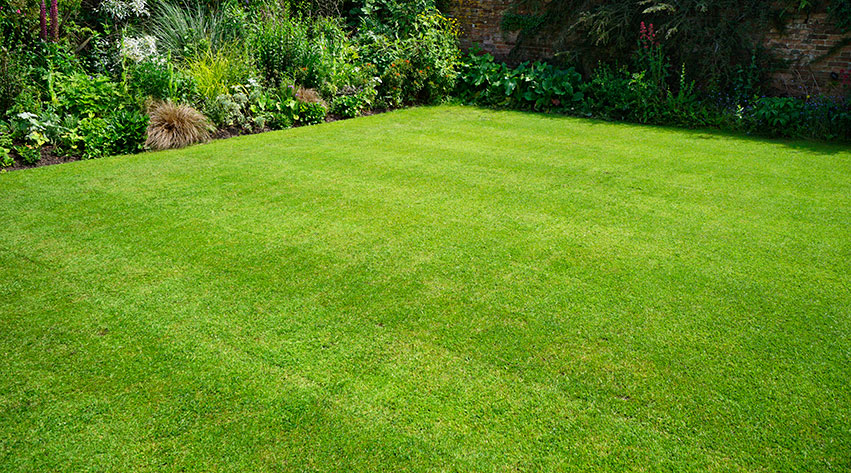 How to create and maintain the perfect lawn