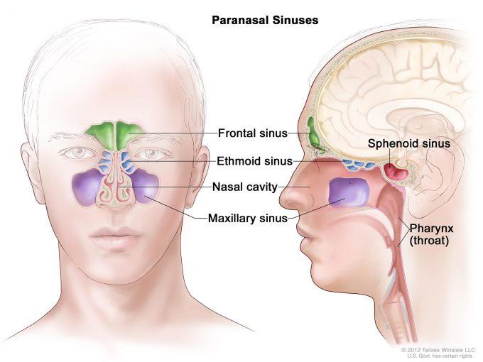 Nasal Cavity and Paranasal Sinus Conditions | Pacific Eye ...