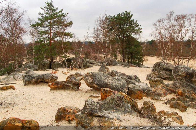 Forêt de Fontainebleau - Roches grayeuses et sable fin ...