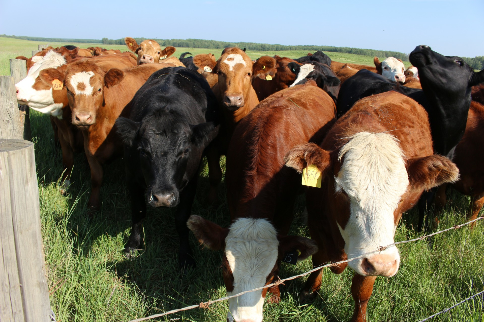 Definition of Herd Mentally