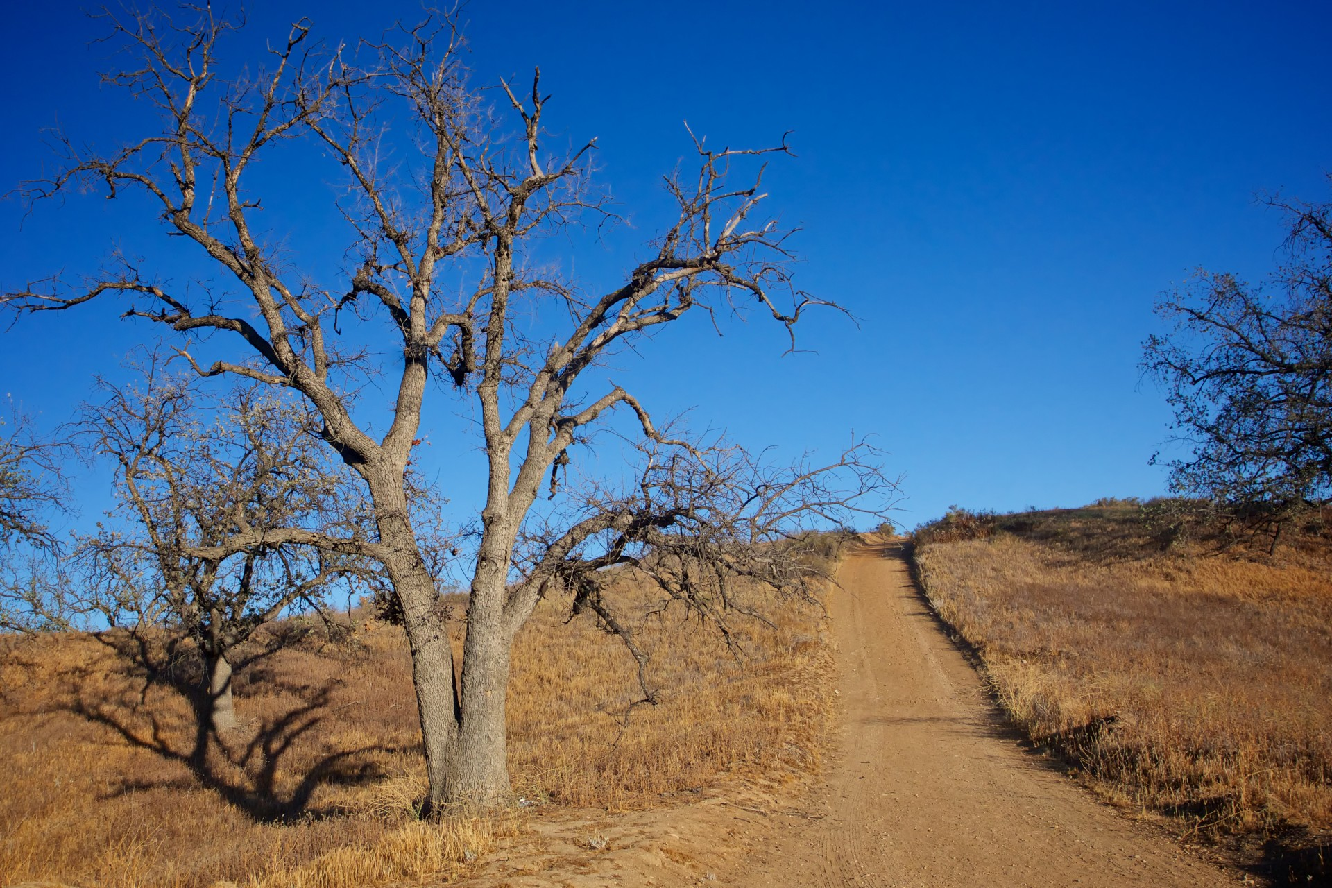 Path Through Wilderness Free Stock Photo - Public Domain Pictures