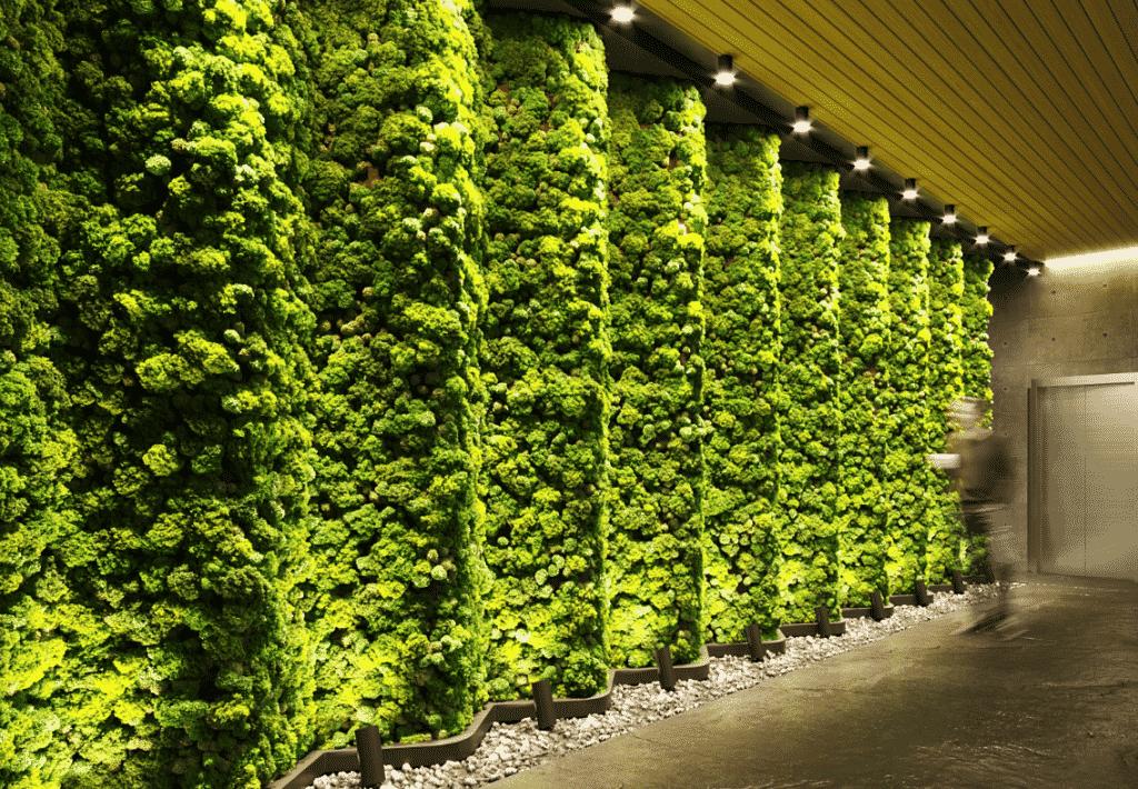 Mood Moss - Moss Types   Quiet Earth Moss