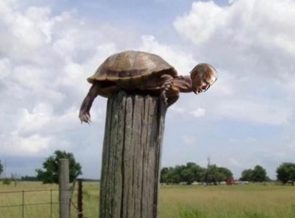 Biden is a post turtle. | River Daves Place