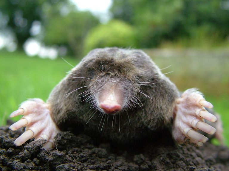 What Is Mole Day? - Date and How to Celebrate