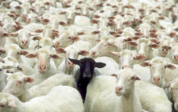 Idiom: The Black Sheep of the Family - Online Editing and ...