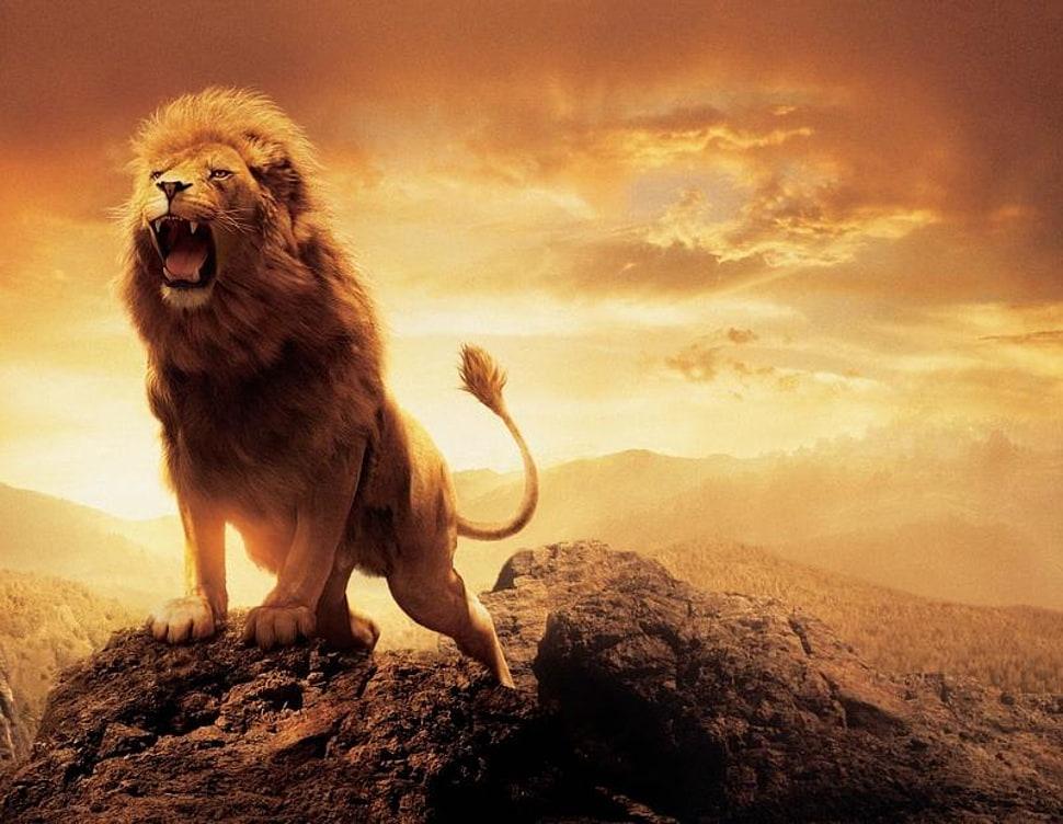Roaring lion on top of rock formation HD wallpaper | Wallpaper Flare