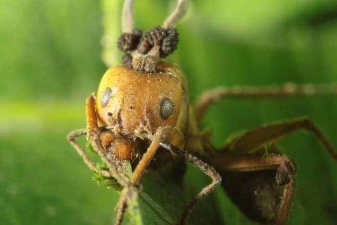 Science! Zombie Ants & Rain