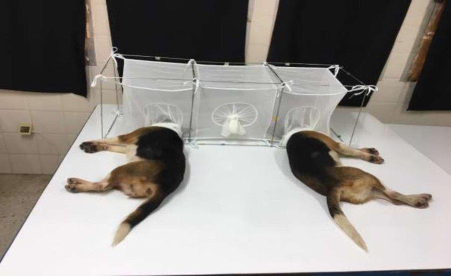 fauci-puppies.jpg&f=1&nofb=1