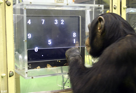 chimpAP0512_468x321.jpg&f=1&nofb=1