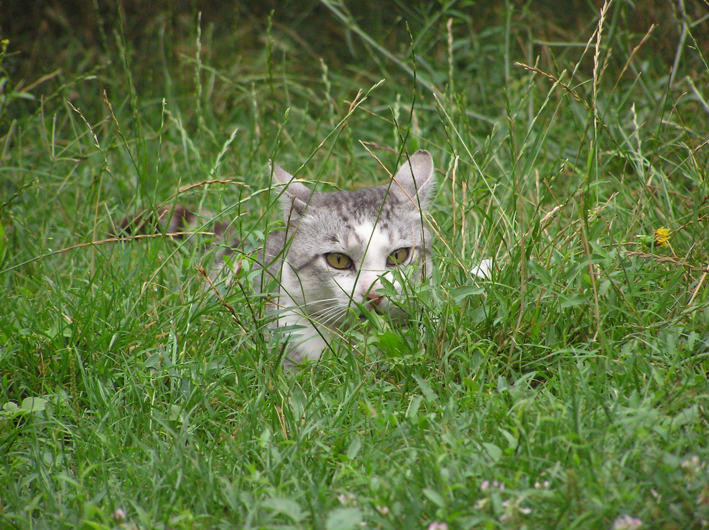 Lurking_cat.jpg&f=1&nofb=1
