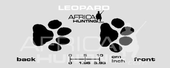leopard-tracks.jpg&f=1&nofb=1