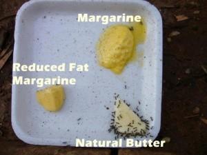 butter-vs-margarine-ants-300x225.jpg&f=1